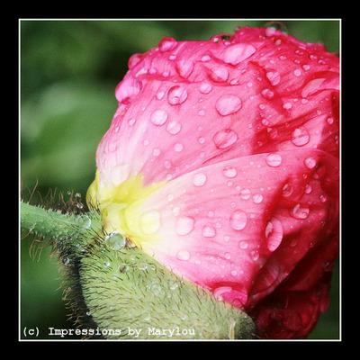 spring 10 - 8.jpg
